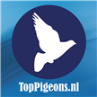Now at TopPigeons 3 new top sales