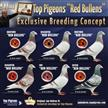 New topyoungsters at Red Bullens auction!