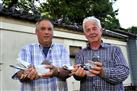 ► Sale 113 pigeons from F.S. Kramer & C. Ouwehand